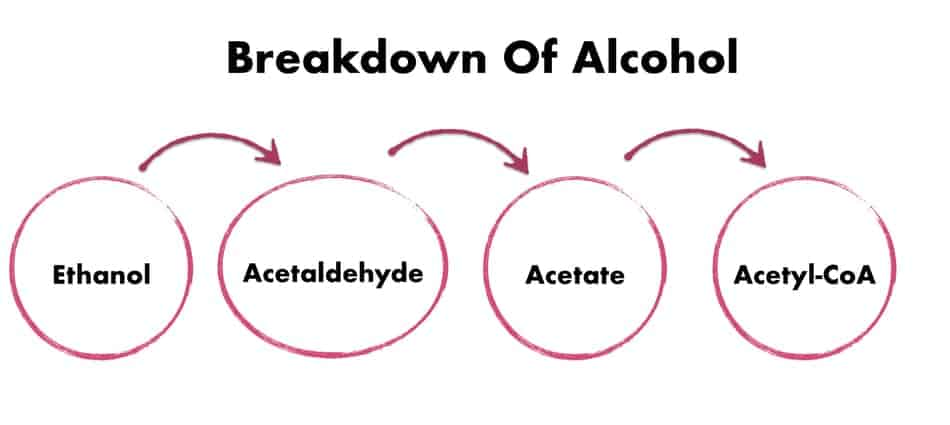 the process of breaking down alcohol