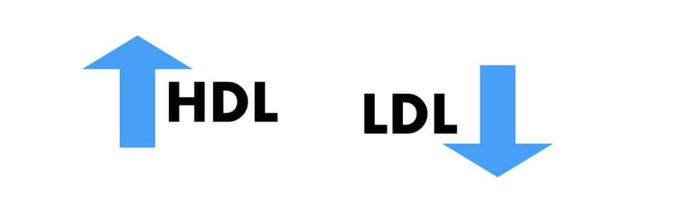omad improves lipid profile