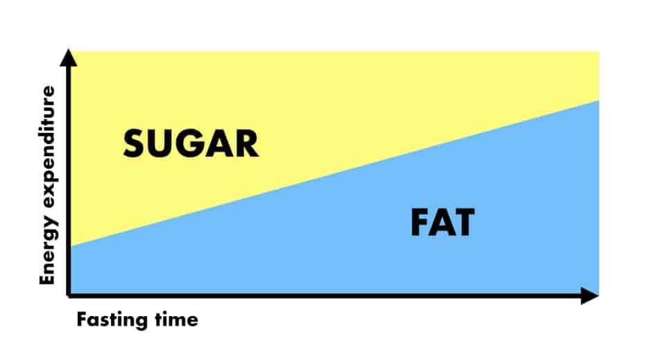 omad fat adaptations