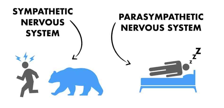 sympathetic vs parasympathetic nervous system