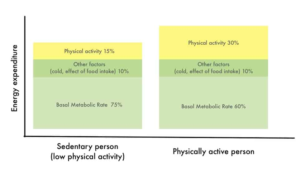daily energy expenditure for physically active and sedentary people